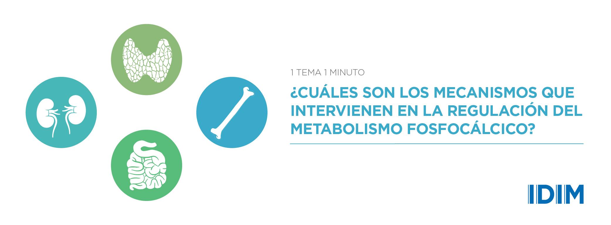 ¿Cuáles son los mecanismos que intervienen en la regulación del metabolismo fosfocálcico?